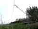 Cây dầu cao 10m làm mất điện cả miền Nam như thế nào?