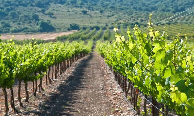 Áp dụng công nghệ cao là bí quyết tăng năng suất chất lượng nông nghiệp tại Israel. Ảnh: nongthonviet.com.vn