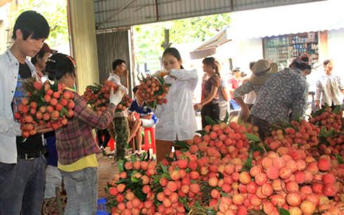 Tiêu thụ vải thiều ở Bắc Giang (Ảnh: Internet)