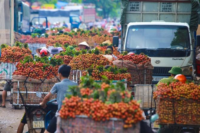 Tình trạng ùn tắc kéo dài diễn ra tại nhiều điểm tập trung thu mua của huyện Lục Ngạn như thị trấn Chũ, ngã ba Kép... (Ảnh: Minh Sơn/Vietnam+)
