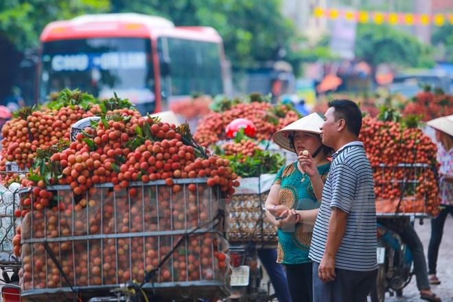 Thương nhân Trung Quốc đến mùa vải đã trực tiếp có mặt ở đây để thu mua. (Ảnh: Minh Sơn/Vietnam+)