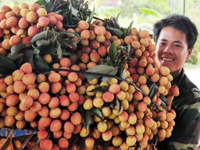 Vietnam Airlines hỗ trợ giảm 10 - 55% giá cước vận chuyển xuất khẩu vải thiều