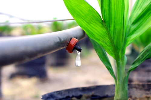 Làm nông nghiệp kiểu Israel (1)