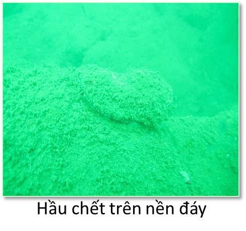 Thừa Thiên Huế, các nhà khoa học khảo sát ở hai địa điểm, ghi nhận san hô chết và rất ít gặp các loài cá kinh tế và điển hình cho sinh cảnh rạn.