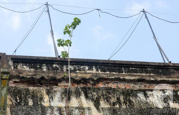 Những mảng tường bong tróc gạch vữa, rêu phủ kín. Một người lớn tuổi cho biết, căn nhà này trước năm 1975 là của một gia đình người Hoa và họ mở hàng ăn, sau đó thì có nhiều người đến ở.