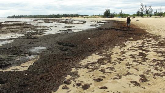 Rong biển trôi dạt vào dọc bờ biển Quảng Bình