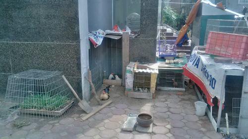 Để cho các hộ dân sinh sống gần đó nuôi gà
