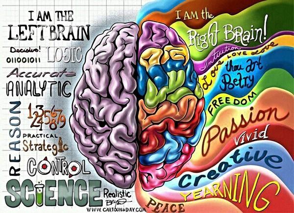 Những người thuận tay trái chịu sự điều khiển chủ yếu của não phải.