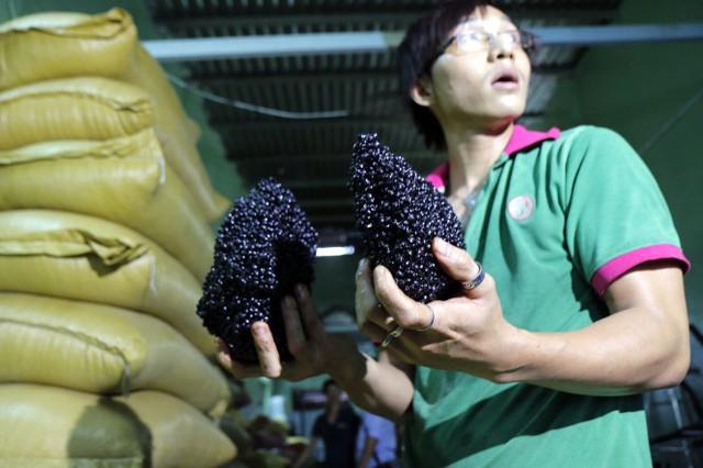 Cà phê độn đậu nành tại cơ sở rang xay cà phê Q.Bình Tân bị cơ quan chức năng thu giữ - Ảnh: NGỌC DƯƠNG