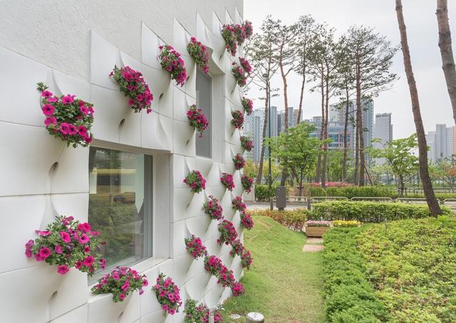 Những bức tường trồng hoa không có ban công và bệ của sổ