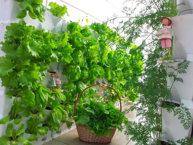 Ngoài trồng hoa bạn có thể trồng rau ...