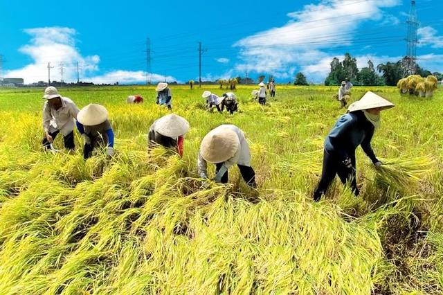 Tăng trưởng ngành nông nghiệp sẽ bấp bênh trong vài năm tới