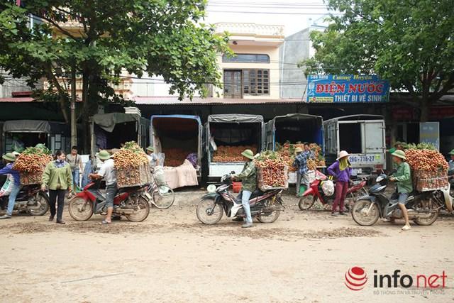 Phần lớn người nông dân sử dụng xe máy thồ hàng tạ vải di chuyển đến các điểm thu mua tại huyện Phượng Sơn