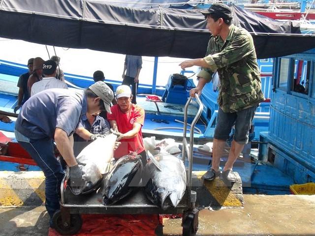 Vận chuyển cá ngừ đại dương đi tiêu thụ. (Ảnh: Nguyên Lý/TTXVN)