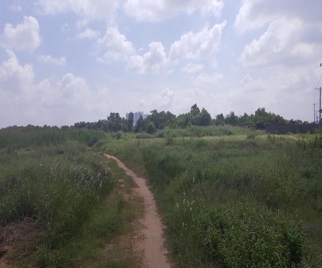 .   Gần 50ha đất của dự án chỉ là cỏ dại.