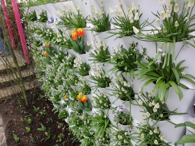 Bức tường hoa sinh động cho ngôi nhà bạn