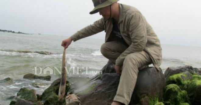 Cá biển chết hàng loạt: Do khu công nghiệp Vũng Áng xả thải?