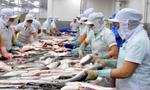 Lô hàng cá da trơn của 2 doanh nghiệp Việt Nam bị nhiễm hóa chất