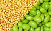 Lệnh cấm nhập khẩu đậu nành, ngô từ Mỹ vào Nga có hiệu lực