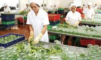 """Xuất khẩu nông sản """"ngại"""" gì từ thị trường truyền thống?"""