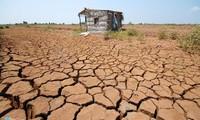 Đồng ruộng nứt toác, nước nhiễm mặn ở miền Tây