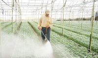 Nhiều ưu đãi cho vốn FDI vào nông nghiệp
