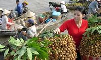 Cần hoàn chỉnh chuỗi liên kết tiêu thụ nông sản